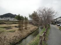 130320_奈良県明日香村 (1)